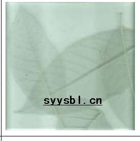 工艺夹胶树叶玻璃